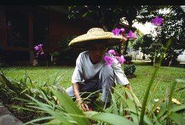 Bekerja di Florikultura