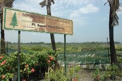 Benara Nurseries Indonesia